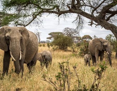 Safari en Tanzanie et Extension Zanzibar au Waridi Beach Resort &Spa 4*