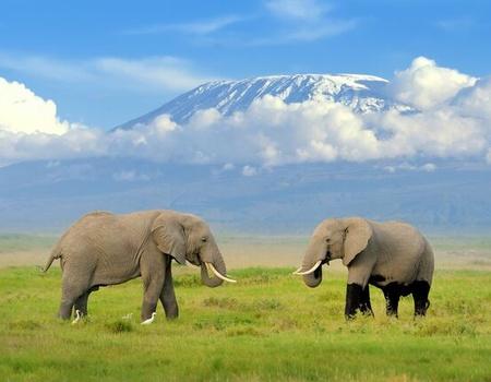 Circuit Mara & Tanzanie