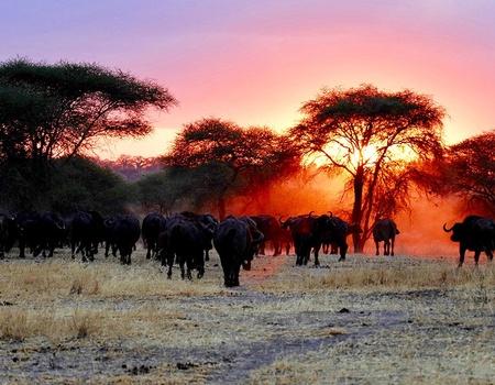 Découverte de la Tanzanie et Zanzibar