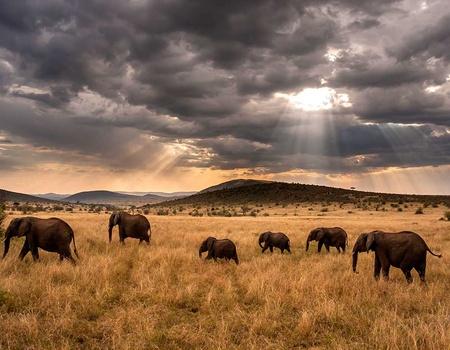 Circuit Safari Kilimandjaro 4*