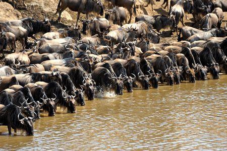 Circuit Explorations du Kenya 100% Safari