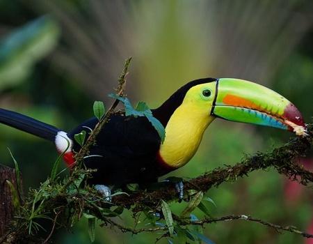 Les Incontournables du Costa Rica 10J/08N