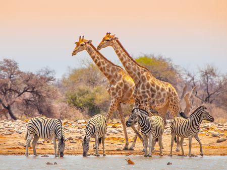 Circuit Splendeurs de Namibie