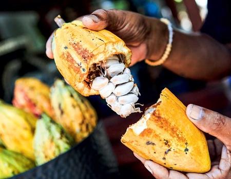 Circuit Sur la route du Cacao