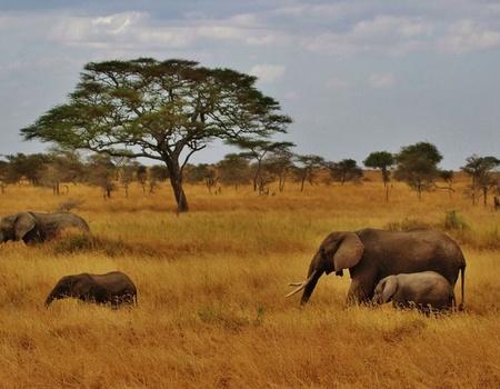 Circuit Sur les Pistes de Tanzanie et de Zanzibar