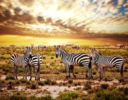 Circuit Tanzanie sauvage