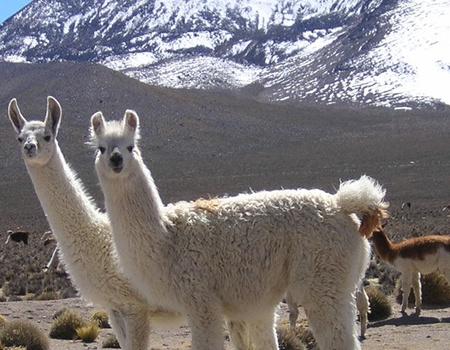 Circuit Regard sur le Pérou