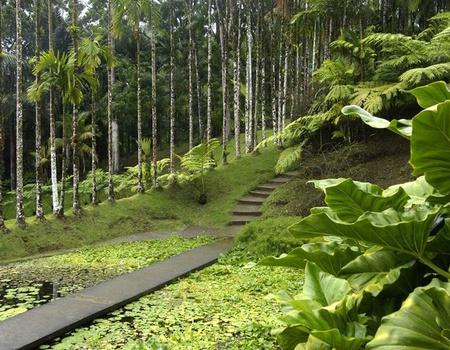 Circuit Échappée Martinique Insolite depuis La Pagerie Tropical Garden 4*