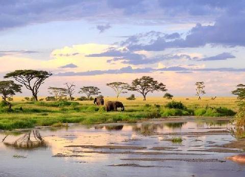 Safari Féeries d'Afrique - inclus Amboseli, Lac Nakuru et Masaï Mara - 1