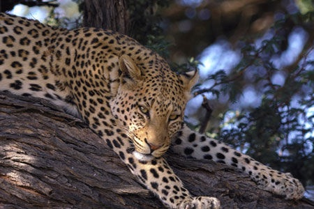 Circuit Premiers Regards Afrique du Sud et extension Victoria Falls - 1