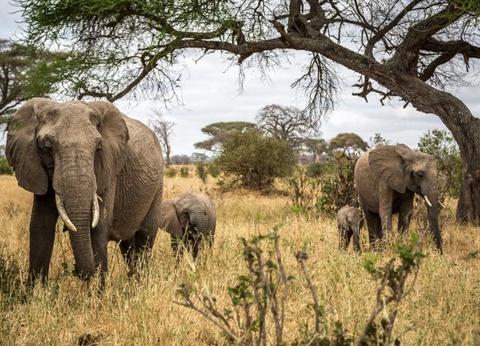 Safari en Tanzanie et Extension Zanzibar au Waridi Beach Resort &Spa 4* - 1