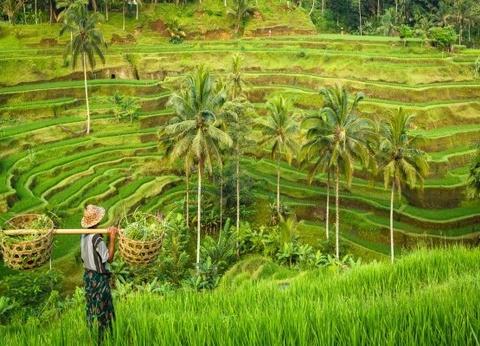 Circuit Merveilles de Bali - 1