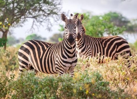 Combiné circuit et séjour Safari - 1 nuit Tsavo Est - 1
