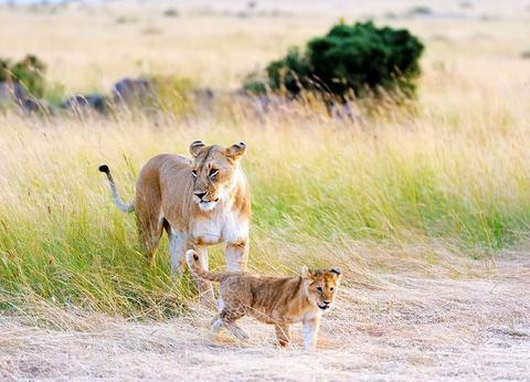 Hôtel Leopard Beach Resort 5* + Safari 3 nuits - 1