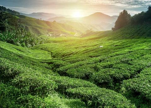 Circuit privé Nature et temples du Sri Lanka 3* - 1