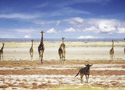Circuit Périple au coeur des terres africaines, Namibie, Botswana, Zimbabwe - 1