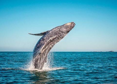 Circuit Aurores boréales et baleines - 1