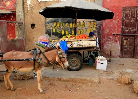 Circuit Grand tour du Sénégal - 1