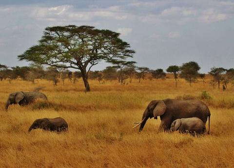 Circuit Sur les Pistes de Tanzanie et de Zanzibar - 1