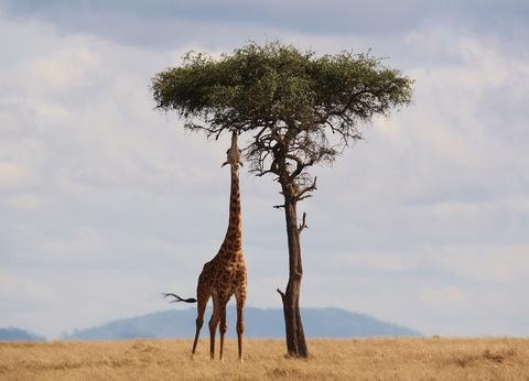Kenya rencontres chasseurs âgé de 20 ans datant d'un 16 ans au Texas