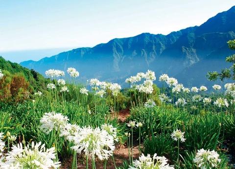 Autotour La route des fleurs depuis le Club Héliades Pestana Ocean Bay Suites 4* - 1