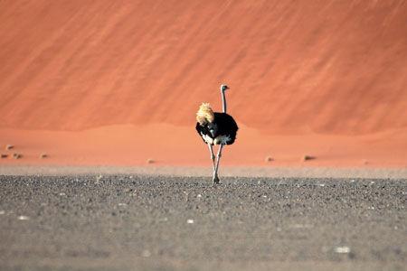 Circuit Lumières de Namibie 3/4* - 1