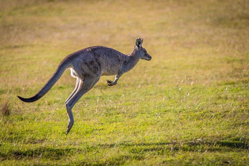 Australie - Circuit Australie, à la Découverte d'un Continent