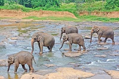 Sri Lanka - Circuit Cap sur le Sri Lanka