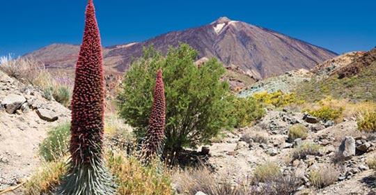 Canaries - Tenerife - Espagne - Séjour Ténérife Saveur Rando 4*