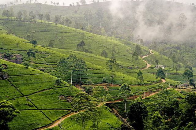 Sri Lanka - Circuit Ceylan Essentiel