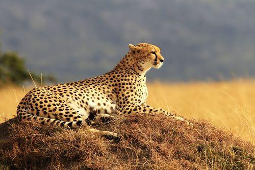 Kenya - Circuit Splendeurs du Kenya et Mombasa