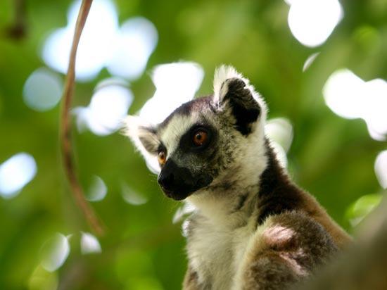 Madagascar - Circuit Merveilles de Madagascar