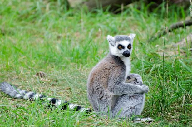 Madagascar - Circuit Cap sur Madagascar