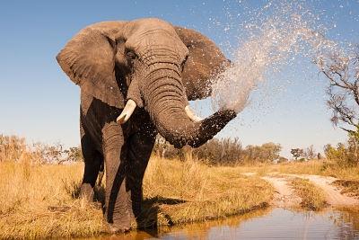 Botswana - Circuit Découvertes Botswanaises