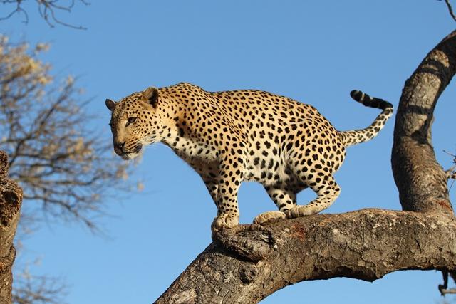 Afrique du Sud - Swaziland - Circuit Merveilles de l'Afrique du Sud