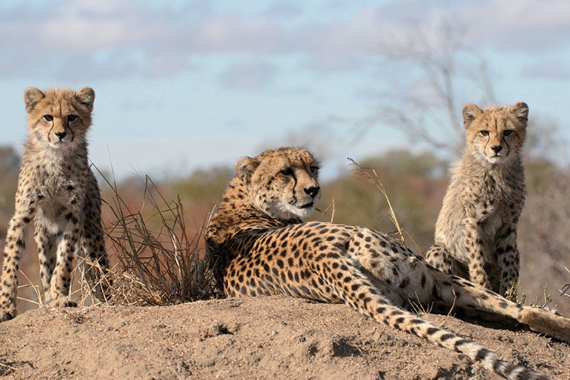 Namibie - Circuit La Namibie : l'Afrique Grandeur Nature