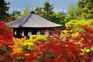 Japon - Circuit Samourais et Jardins Zen avec Lufthansa